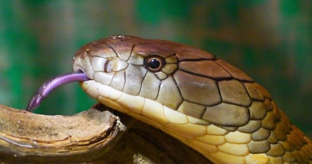 Snake Ransomware attack
