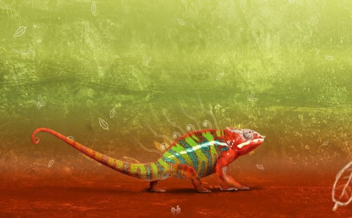 Chameleon Wallpaper App